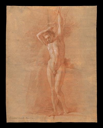Desnudo masculino atado a un árbol