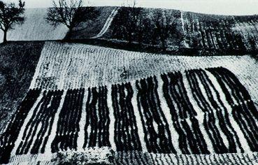 Como fili di lana