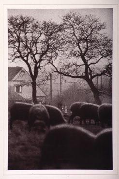Borinage, Belgique 1960