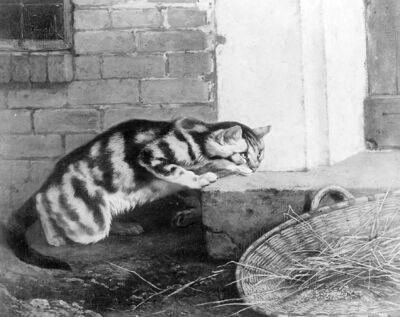 Chat guettant une proie