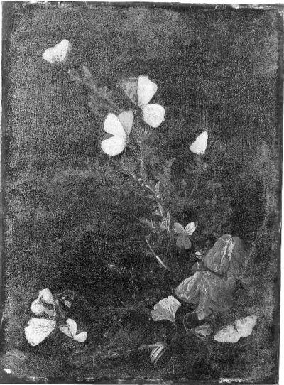 Fleurs, papillons, escargot, lézard