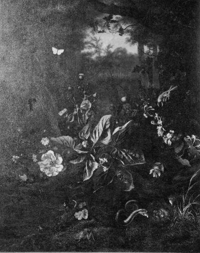 Planten en diertjes in het bos