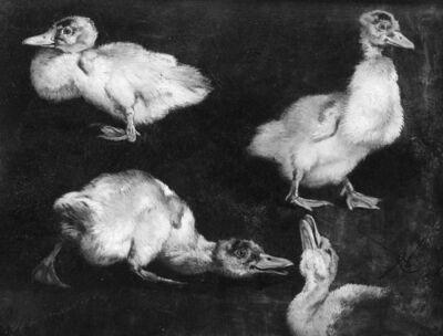 Jeunes canards (étude)