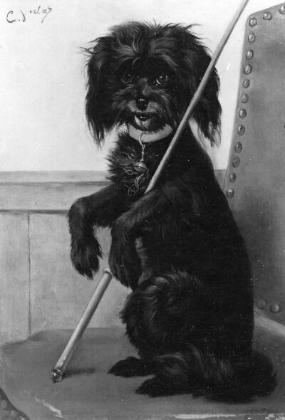 Etude de chien