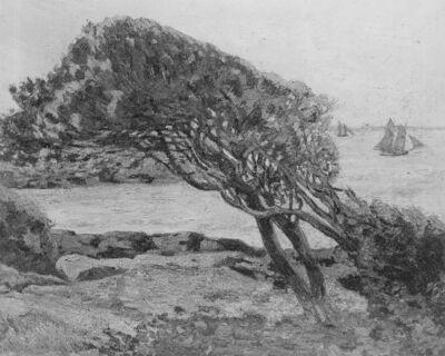Chêne vert, matin (marée basse)