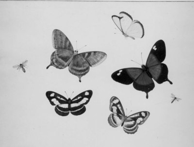 Image from object titled Vlinders en insekten