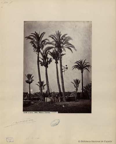 Elche (Alicante), palmeras y huertanos [Material gráfico]