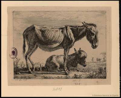 [Dos burros, uno de píe en primer término, y otro sentado detrás] [Material gráfico]