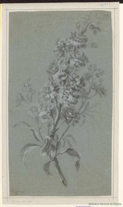 [Rama con hojas y flores] [Material gráfico]