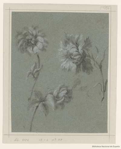 [Tres flores aisladas] [Material gráfico]