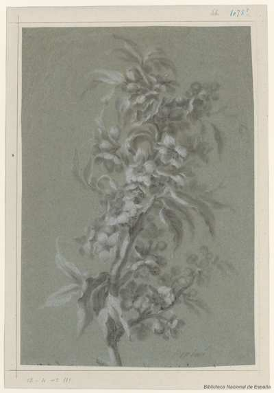 Image from object titled [Mata con flores y bayas] [Material gráfico]