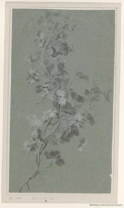 [Rama con flores y bayas de planta trepadora] [Material gráfico]