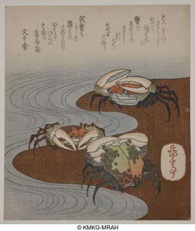 Trois crabes au bord de l'eau
