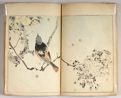 Images across bound pages. Images include flowers and bird life.