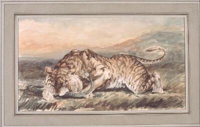 Un tigre - Dibujo