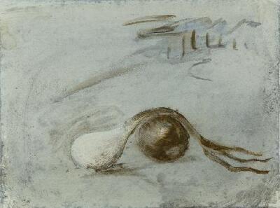 Oignon - Dibujo