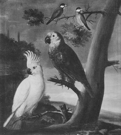 Image from object titled Papegojor och andra fåglar