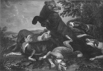 Image from object titled Hundar anfalla en björn