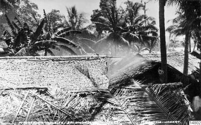 Hyddtak vid Port Adam. Salomonöarna: Malaita. Vykort. J.W. Beattle, Hobart, inget datum angivet. Gåva av K.E. Larsson 1962-03-30. (enligt katalogkort).; 014802; Melanesien; Pacifiken; Pacifiska oceanen; Stilla havet;...