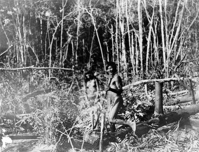 Motiv: kvinna skördar mandiocarötter i odling. Foto av: Max Schmidt Dato: 1910. Erh.: av dito Dato: ? Nr.Neg.:-- Publ.: M. Schmidt: Die Paressí-Kabisi. ( Baessler Archiv, Bd. IV: 4/5, 1914, fig.52. Lokal: Uazirimi, R....