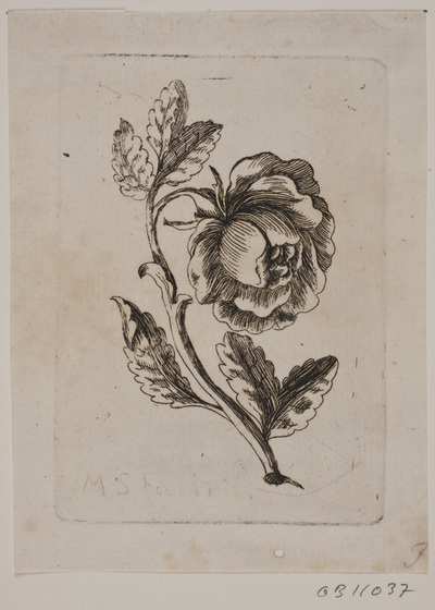 Image from object titled En rose
