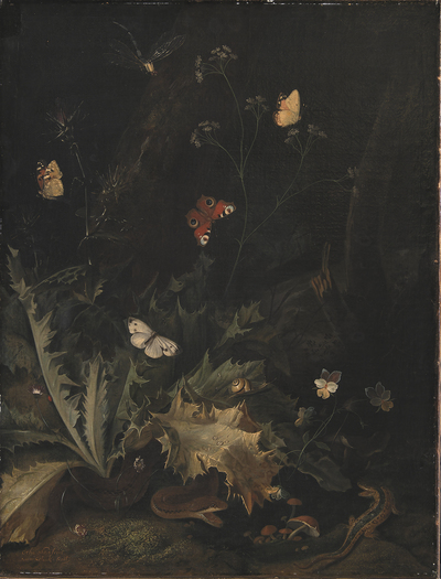 A Forest Floor with a Thistle, a Snake, a Lizard and Butterflies