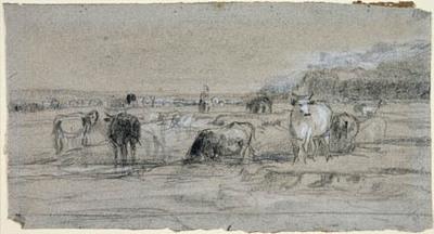 Køer ved et vadested