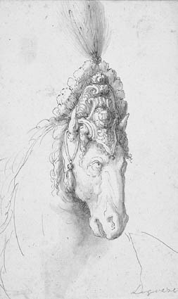 Head of a horse with fancy headgear