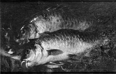 Two Carps on a Kitchen Table