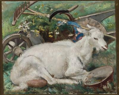 Koza na tle pejzażu