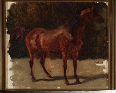 Studium konia