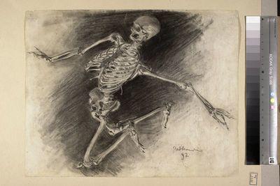 Studium szkieletu