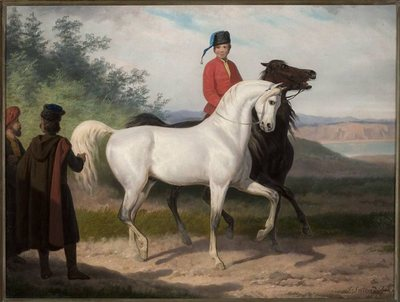 Kupno konia arabskiego