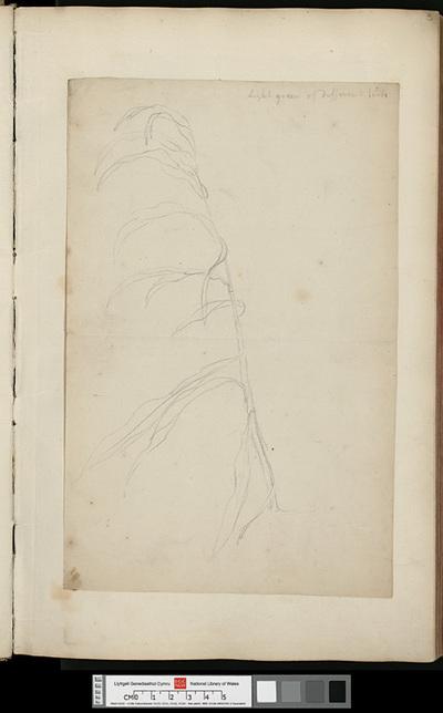 Cozens's sketches
