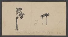 Zwei Palmen und ein Laubbaum nach Lazzaro Bastiani
