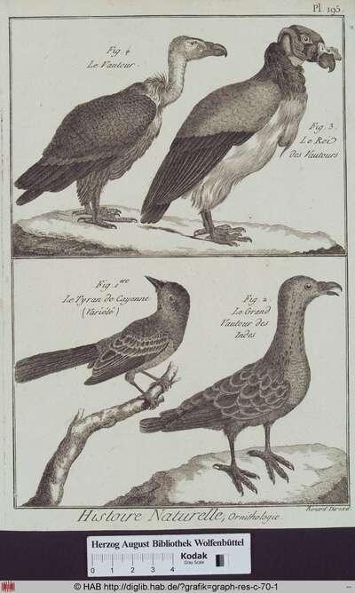 Abbildungen von verschiedenen Geierarten (Großer indischer Geier, Aasgeier) und dem Cayenne Tyrannen.