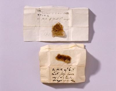 Oregelbundet, gulnat tygfragment (yllekypert?), enl.uppgift från den s.k. Gustav Vasas dräkt som förvarats på Lübecks rådhus.
