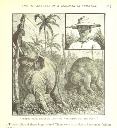 """Image from object titled Sumatran elephant from """"Zigzag Journeys in the Antipodes ... Fully illustrated"""""""