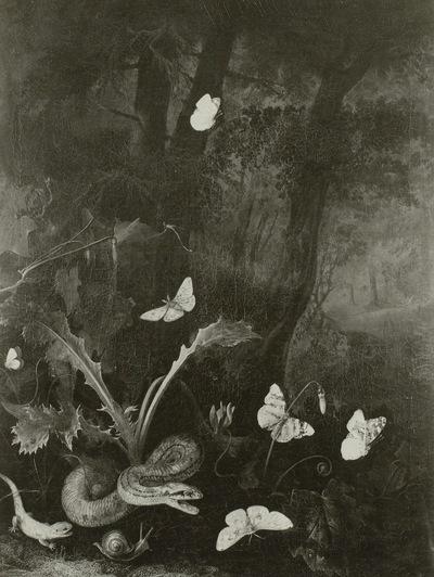 Ringelnatter, Eidechse und Schmetterlinge