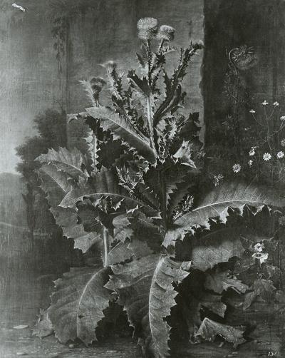 Distelstauden und Kornblumen