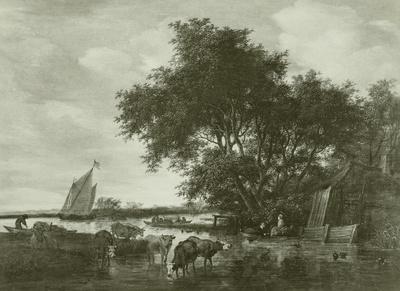 Rindvieh im Fluß