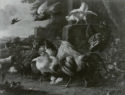 Der Raubvogel im Hühnerhof