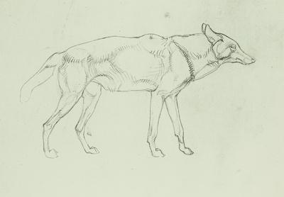 Wolf (in Schrittstellung, Profil nach rechts)