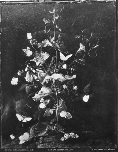 Pflanzen mit Insekten und Amphibien