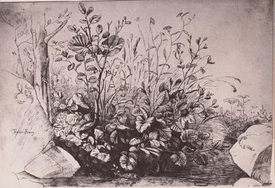 Gräser und Wiesenblumen