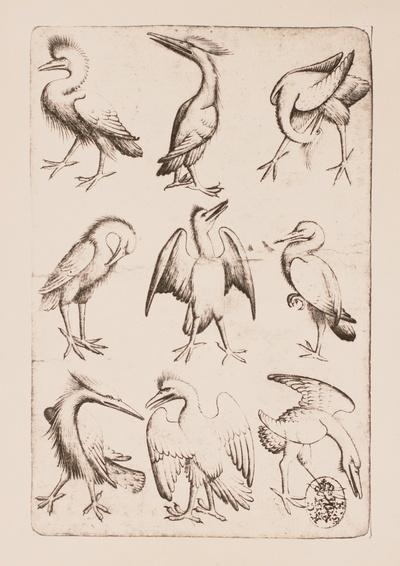 Vogel-Neun