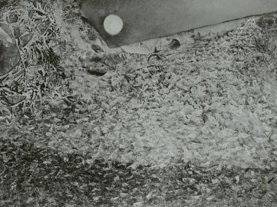 Sauterelles à la lune / Heuschreckenlied an den Mond
