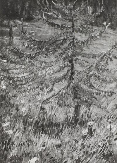 Junge Lärche auf einer Waldwiese