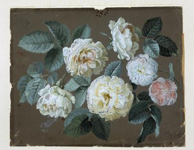"""Johann Samuel Arnhold (1766-1828). Studienblatt """"Rosen"""" für Porzellanmalerei"""