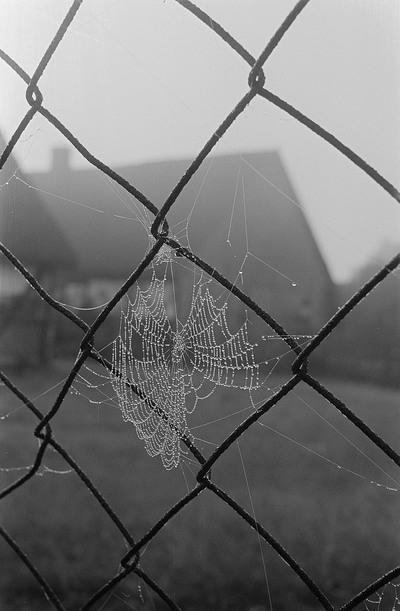 Spinnennetz in einem Maschendrahtzaun